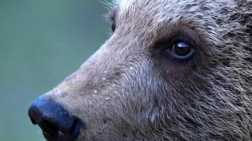 Immagine tratta da 72 animali tenerissimi