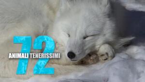 72 animali tenerissimi
