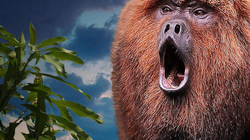 Immagine tratta da 72 animali pericolosi: America Latina