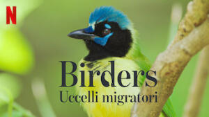 Birders - Uccelli migratori