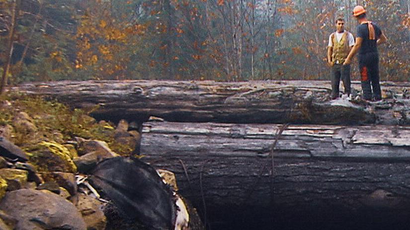 Immagine tratta da Big Timber - I taglialegna