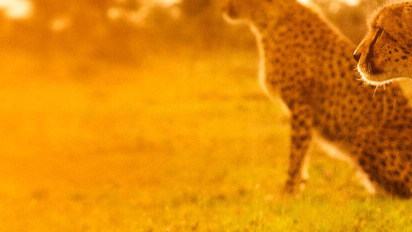 Immagine tratta da David Attenborough: una vita sul nostro pianeta