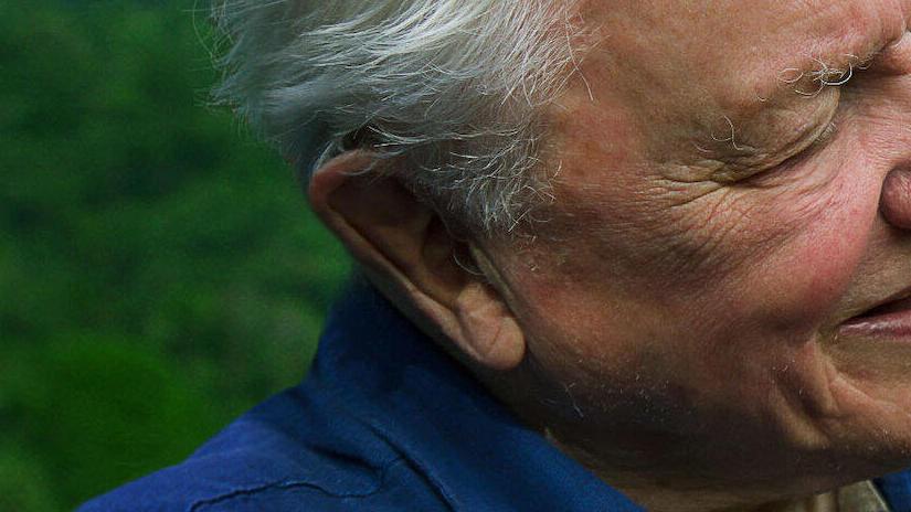 Immagine tratta da David Attenborough: la vita a colori
