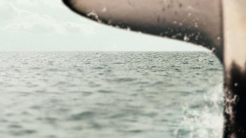 Immagine tratta da Il faro delle orche