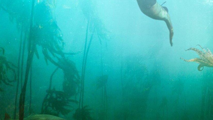Immagine tratta da Il mio amico in fondo al mare