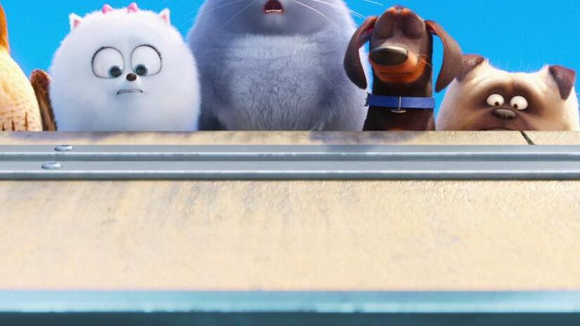 Immagine tratta da Pets - Vita da animali