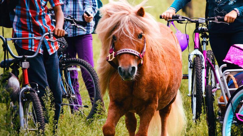 Immagine tratta da Ponysitter