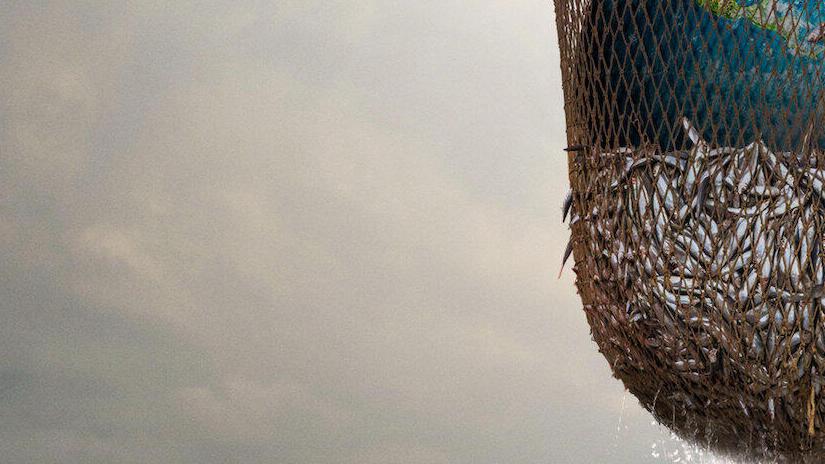 Immagine tratta da Seaspiracy: esiste la pesca sostenibile?